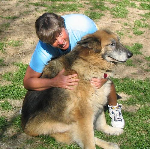 tulsulyos-kutya