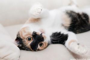 Milyen a macskabiztos otthon?