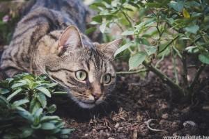 Milyen a macskabiztos kert?