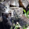 Legyél környezetbarát macskatartó: szemetelj kevesebbet