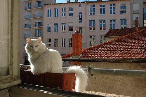 feher-macska