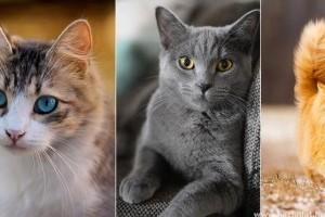 Melyik a kedvenc szőrszínű cicád?
