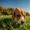 Miért eszi meg az állat az ürülékét?