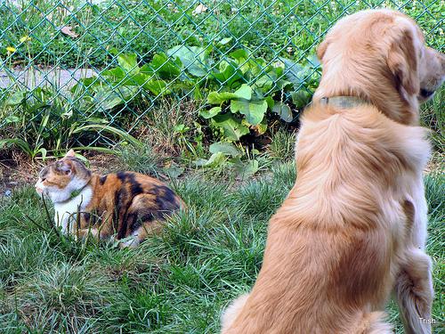 kutya-es-macska-foto