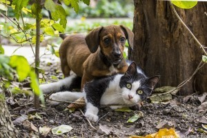 Milyen állatokat ne tarts együtt?