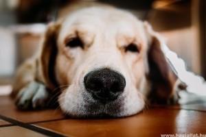 Lázas kutya, macska kezelése