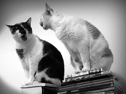 ivartalanított macska tüzel