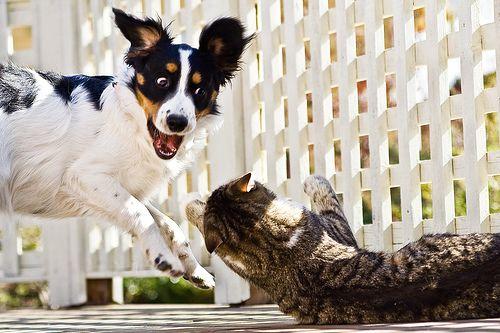 kutya-macska-jetek