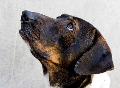 Kutya örökbefogadás