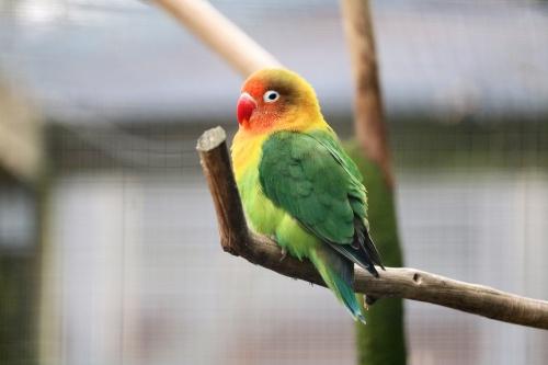 bird-3307602_1280