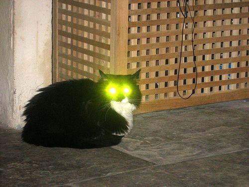 látás emberi macska)