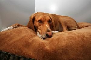 Hogyan válasszunk kutyaágyat?