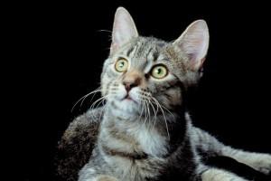 Furcsán viselkedik a macskád?
