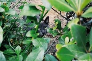 A macskák és a vadászösztön