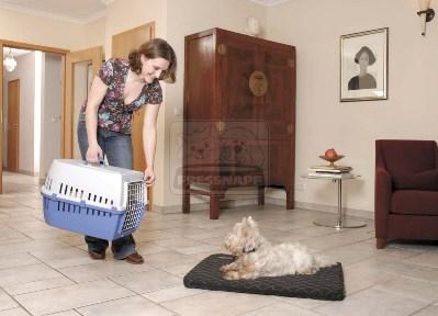 Szállítóbox kutyáknak
