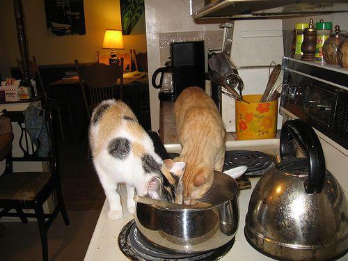 macskaeledel