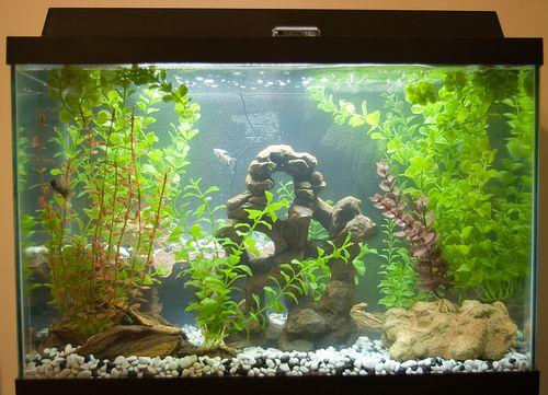 komplett-akvarium
