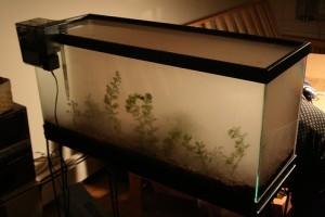 Nélkülözhetetlen akvárium kiegészítők
