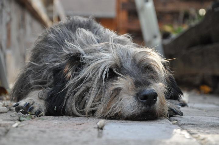 eutanazia_kutya