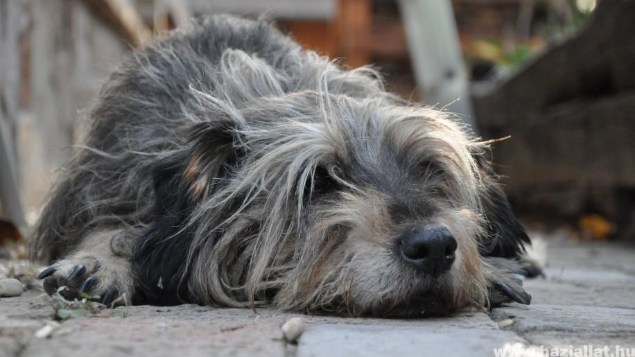 Eutanázia: avagy mikor jön el a kutya (macska) elaltatásának ideje?