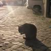 Válhat-e egy kóbor macskából házikedvenc? - 2. rész