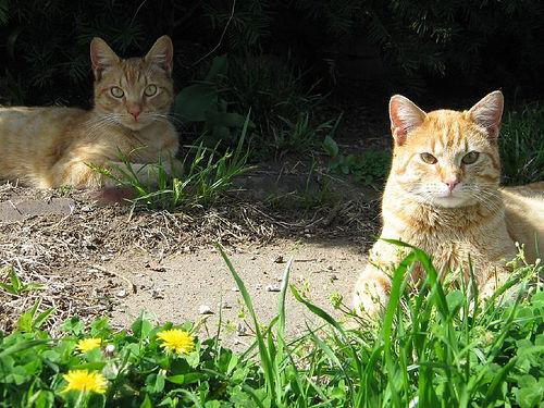 Macska árnyékban
