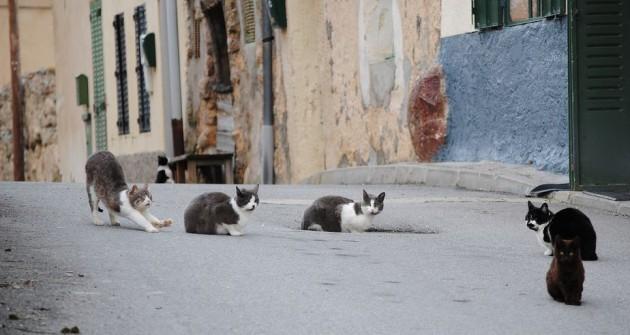 A klímaváltozással ellepnek minket a macskák?