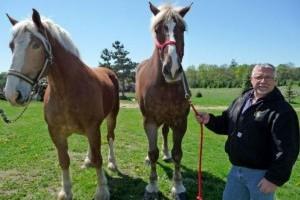 A világ legnagyobb lova