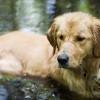 Kutyagondozás hőségben