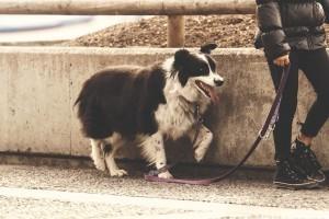 Biztonságos kutyasétáltatás