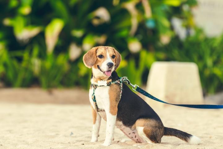 kutya, kutyasétáltatás, séta, mozgás