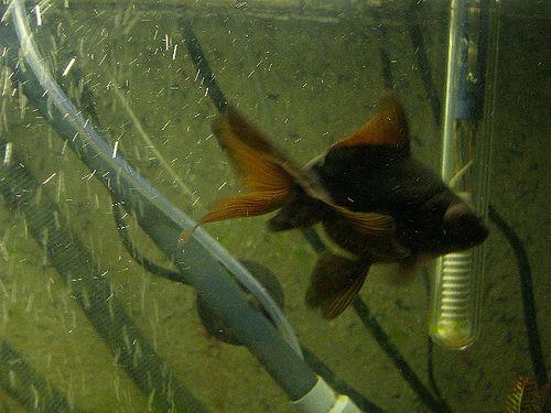 hal-a-vizben