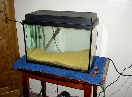 fedeles-akvarium
