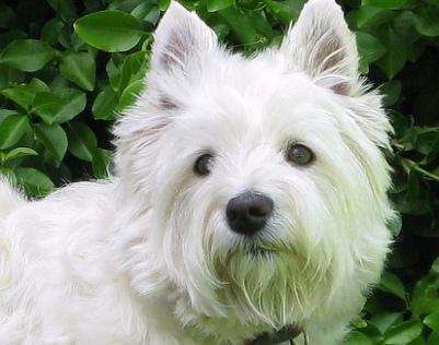 Kutyakozmetikazas