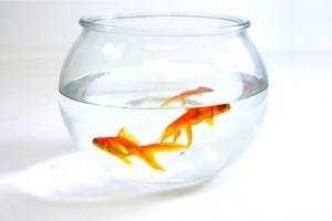 Hogyan tisztítsunk meg egy használt akváriumot?