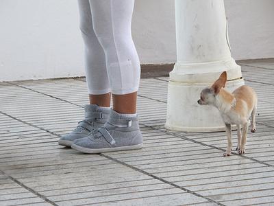 pici-kutya
