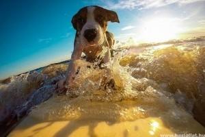 Nyaralás a kutyával - tanácsok, illemszabályok