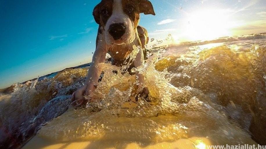 bayern egyetlen nyaralás kutyával