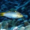 Melyik a legjobb haleledel az édesvízi trópusi halak számára?
