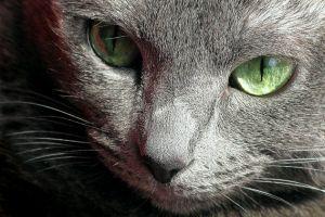 Hogyan készíts művészi fotót a cicádról?