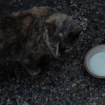 Macska a tejestál mellett