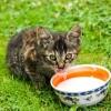 Szabad-e a macskákat tejjel etetnünk?