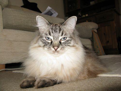 hosszu-szoru-macska