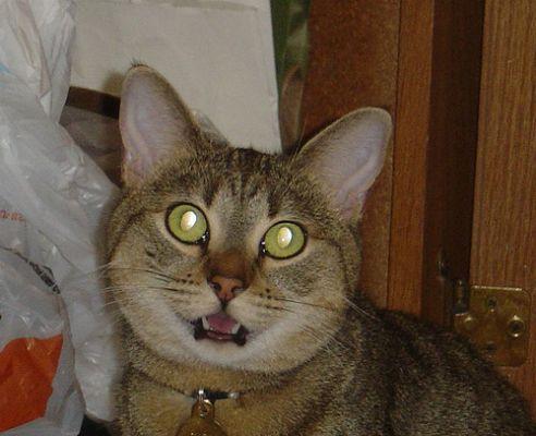 Lighegő macska