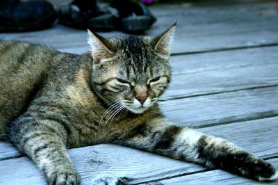 Macska nyáron