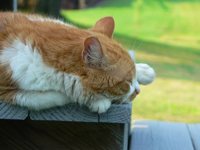 Macska napozás