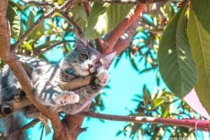 Erre figyelj nyáron, ha macskád van!