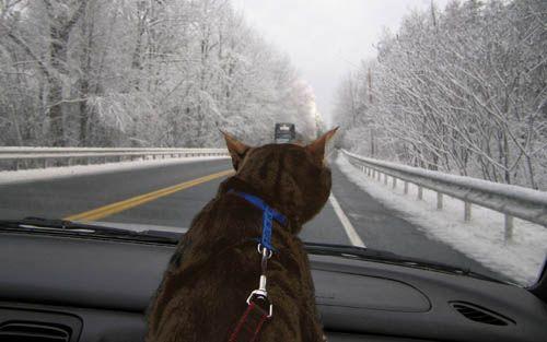 Utazó macska