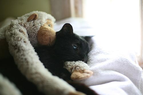 Beteg cica