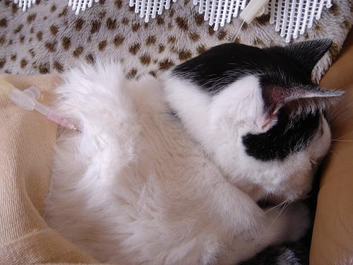 Macska injekció